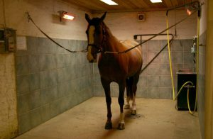 riscaldamento infrarossi cavalli animali allevamenti zootecnico